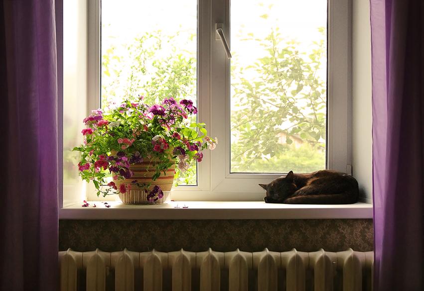 цветущий подоконник фото фотографе виктор